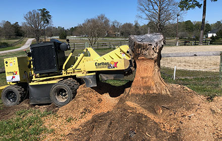 Tree Stump Grinding with a Surprise Inside!